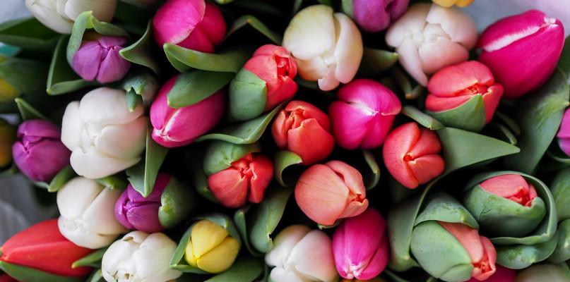 Dzien Matki Tuz Tuz Jakie Kwiaty Najlepsze Dla Mamy Gorlice24 Pl