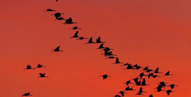 Ludzie znacząco przyczynili się do wymierania ptaków-10230