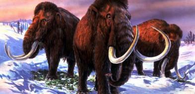 """""""Guardian"""": naukowcy chcą odtworzyć mamuty; pierwsze mamuciątko może urodzić się za sześć lat-10320"""